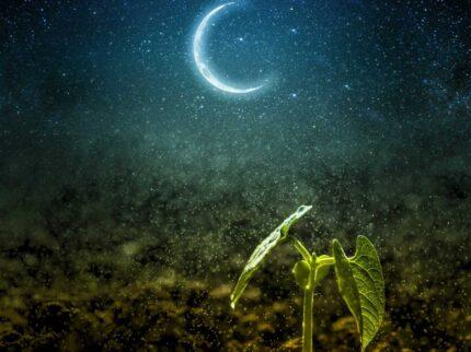 Il padrone della luna